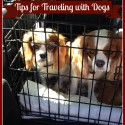 Tips for Traveling with Dogs