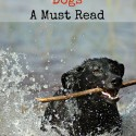 Water Safety for Dogs - A Must Read
