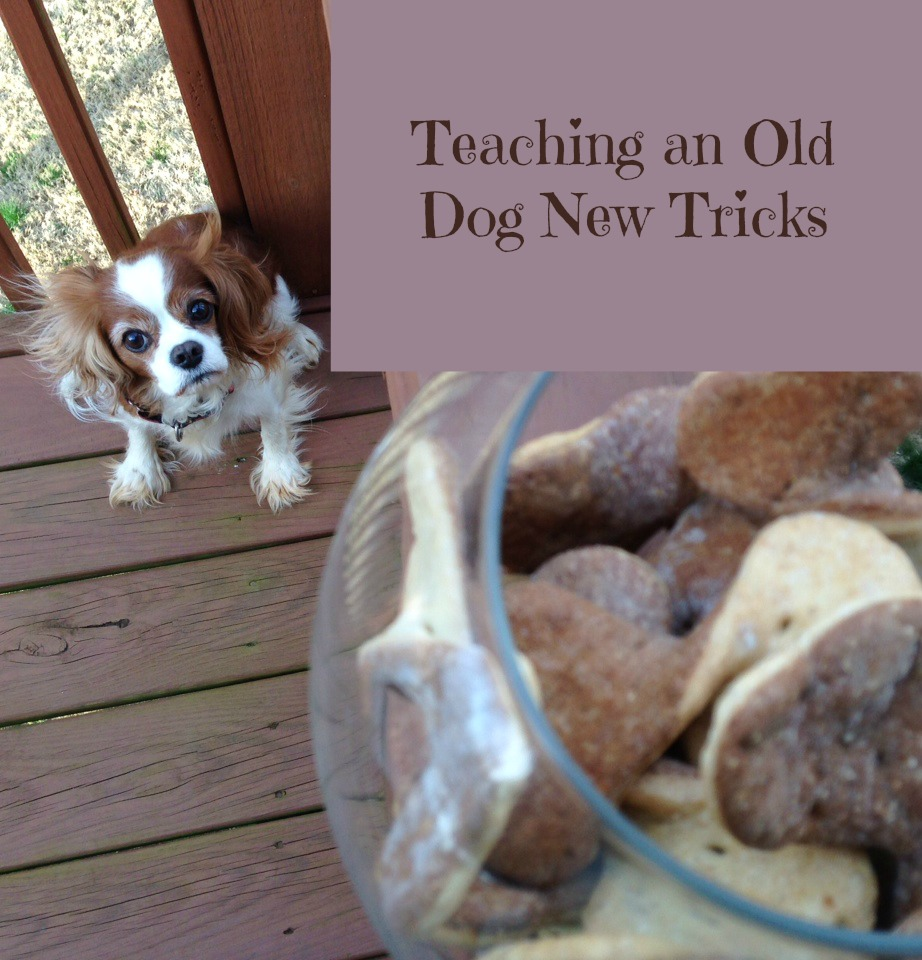 you can t teach an old dog new tricks Why you can't teach an old dog new tricks by nadia whitehead apr 3, 2014 ,  1:30 pm to teach fido new tricks, he has to be focused and alert however.