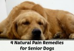 4 Natural Pain Remedies for Senior Dogs