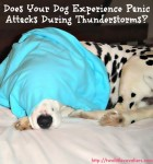 Does Your Dog Experience Panic Attacks During Thunderstorms