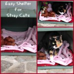 Easy Shelter For Stray Cats