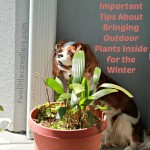 5 Dog Safe Houseplants Plus Important Tips About Bringing Outdoor Plants Inside for the Winter