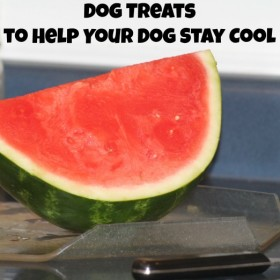 Dog Treats to Help Your Dog Stay Cool