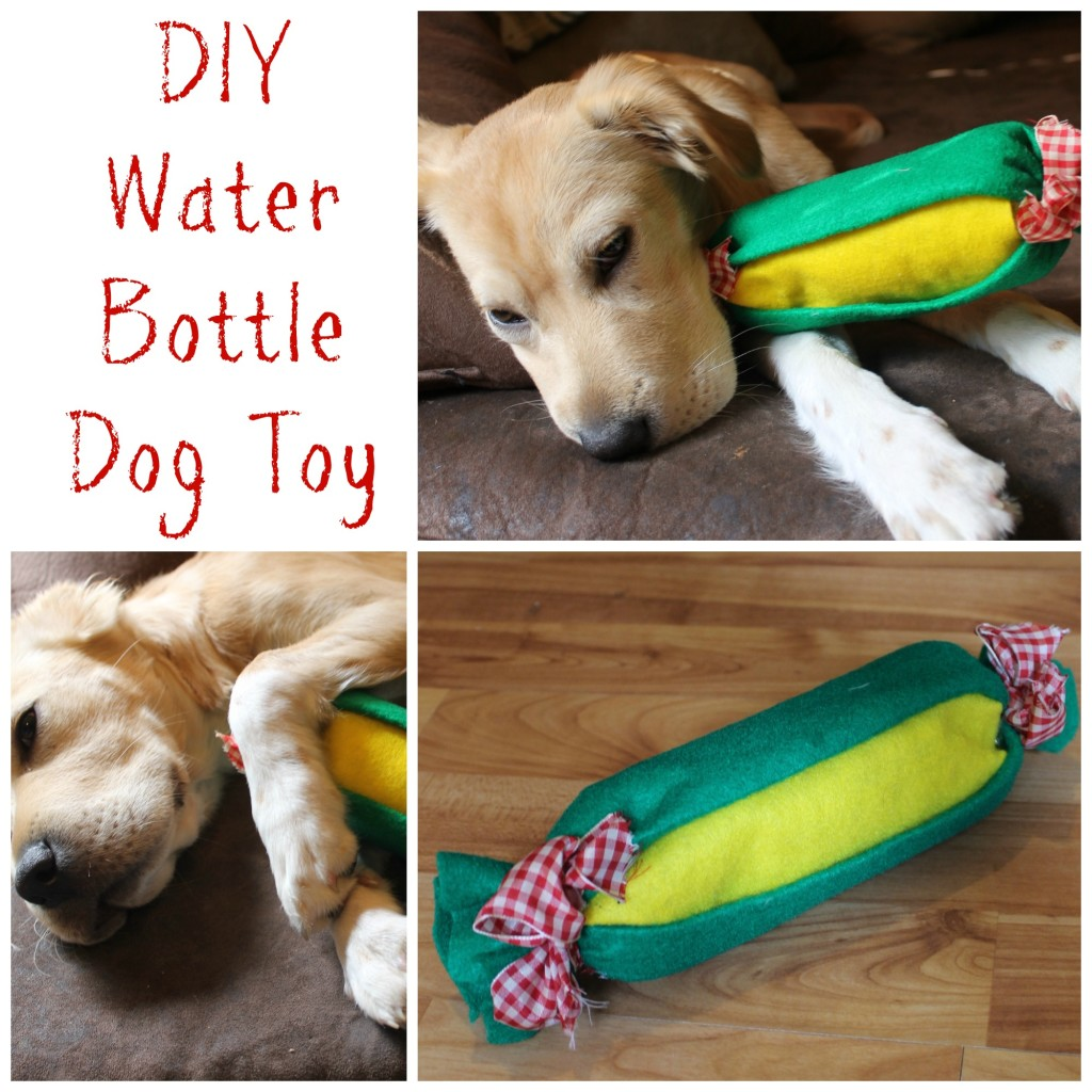 Dog Toy With Bottle Inside