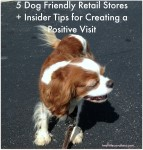 5 Dog Friendly Retail Stores + InsiderTips for Creating a Positive Visit
