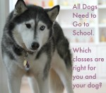 All Dogs Need to Go to School. Which classes are right for you and your dog