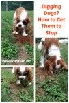 Digging Dogs How to Get Them to Stop
