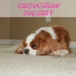 Carpet Hides Dog Hair