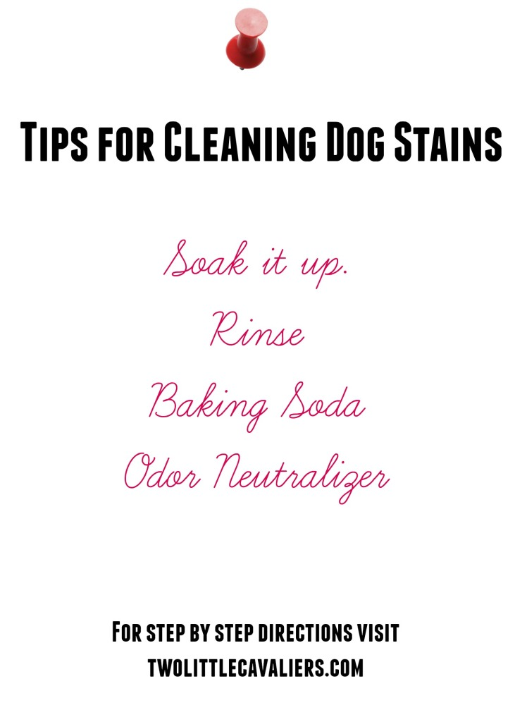 how to clean dog stains from carpet
