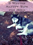 5 Winter Safety Tips for Dogs