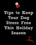 How to Prepare Your Dog for the Holidays Part 1