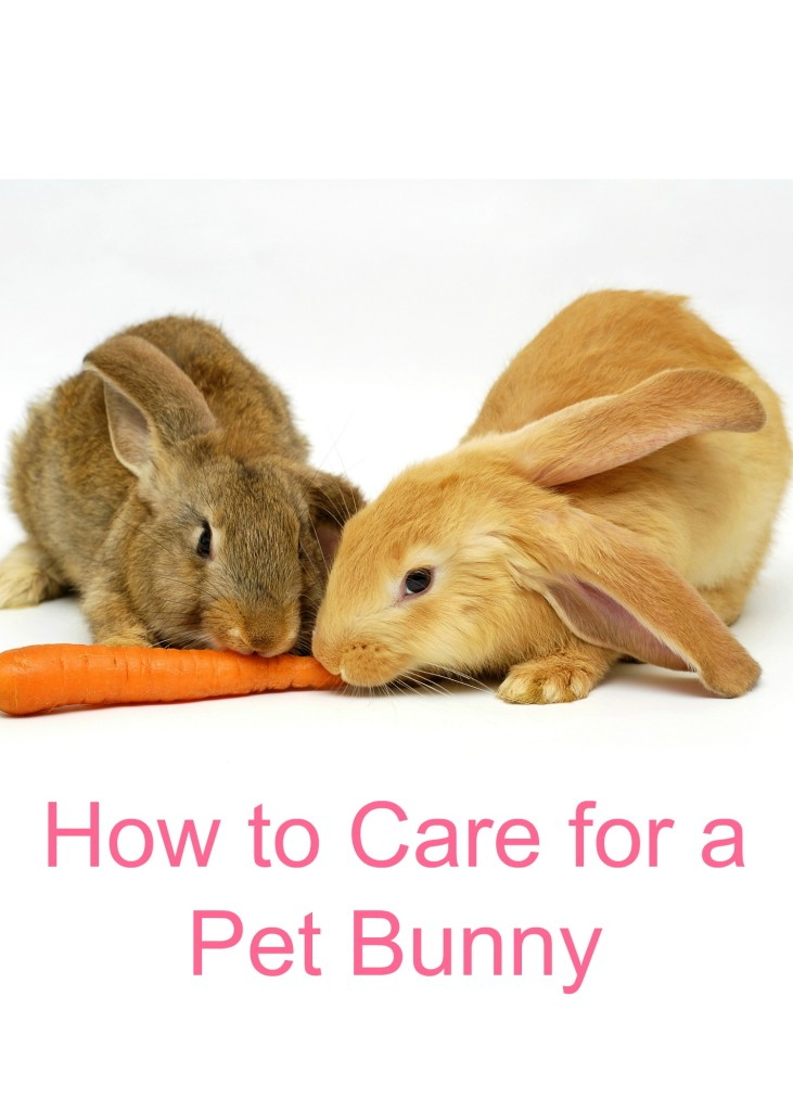 how to care for a pet bunny   two little cavaliers