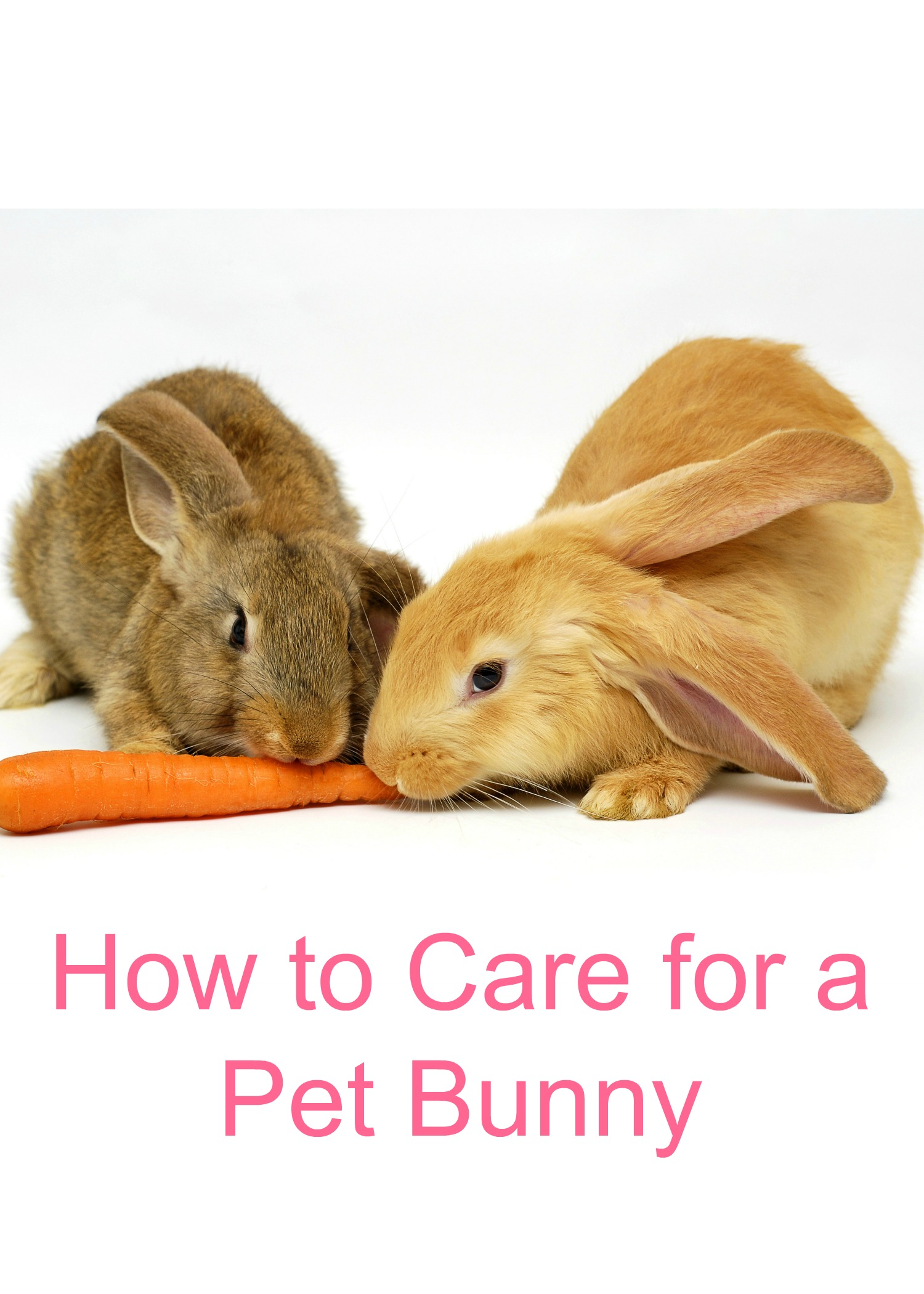 How to Care for a Pet Bunny