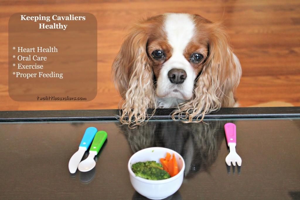 Keeping Cavaliers Healthy