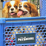 In our PetSmartCart to pick up Natural Balance #PetSmartStory