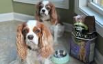 Avocado and Senior Dogs #AvoDermNatural