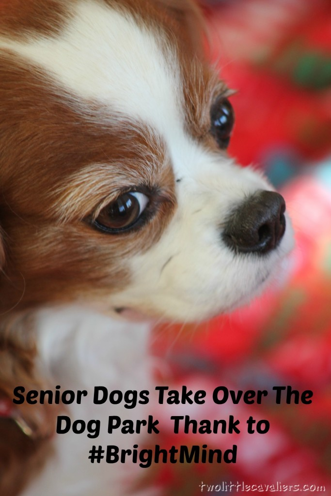 Senior Dogs Take Over The Dog Park Thanks To #BrightMind