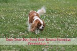 Does Your Dog Need Year Round Parasite Prevention