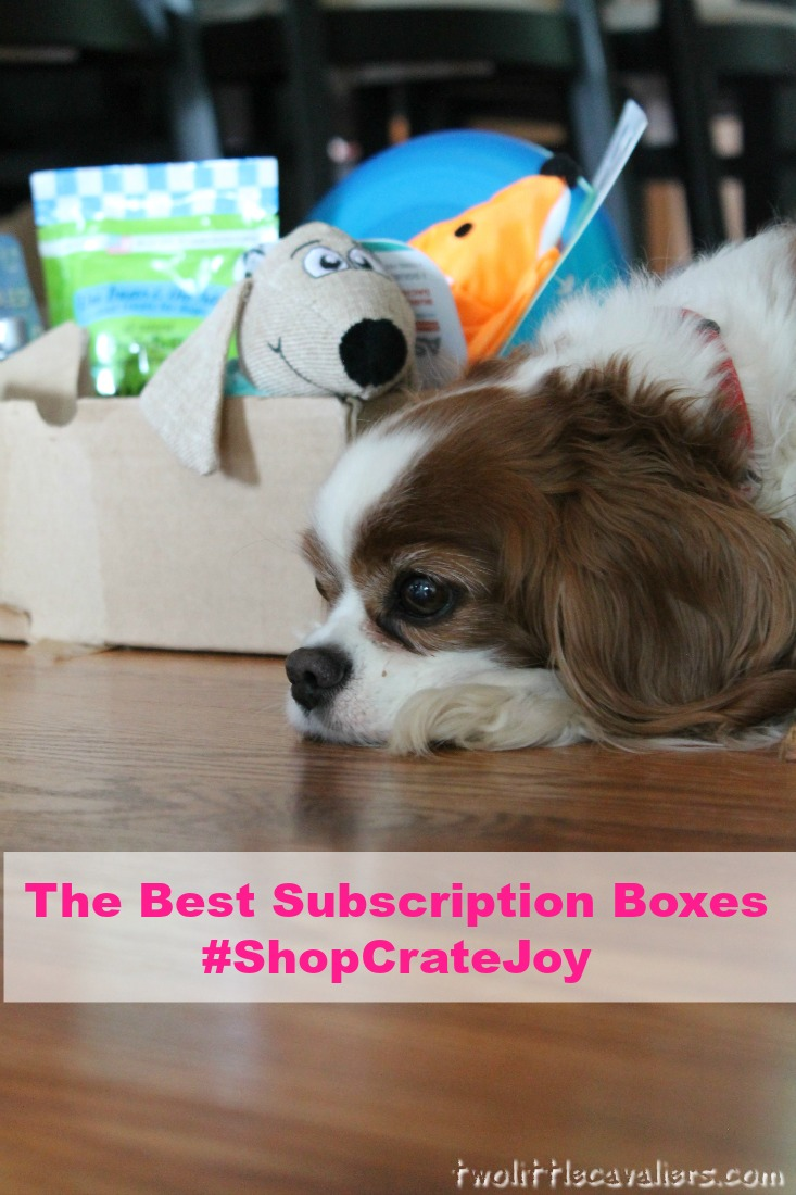 The Best Subscription Boxes #ShopCrateJoy Cavalier King Charles Spaniel with her new Subscription Box